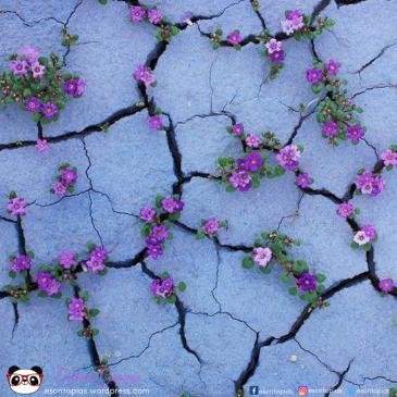 flores-violetas-brotando-rochas-renascer